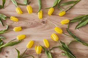 Hintergrundbilder Tulpen Herz Gelb Bretter Blumen