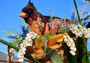 Hintergrundbilder USA Vögel Orchideen Levkojen Kalifornien Design Rose Parade Pasadena Blumen