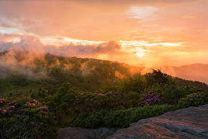 Pictures USA Parks Sunrises and sunsets Shrubs Roan Mountain Rhododendron Gardens