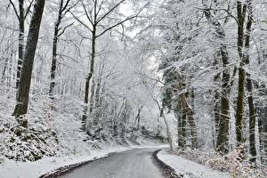 Bilder Winter Wälder Wege Schnee Bäume Natur