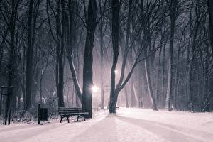 Fotos Winter Parks Schnee Nacht Bäume Bank (Möbel) Natur