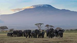 Pictures Africa Parks Mountains Elephant Many Herd Wet Amboseli National Park, Kenya