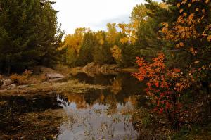 Fotos Herbst Wälder See