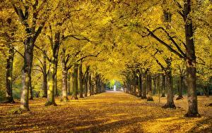 壁纸、、秋、公園、木、木の葉、小路、自然