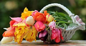 Fonds d'écran Bouquets Rosiers Tulipes Nature morte Panier en osier
