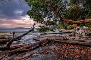 Bilder Kanada Küste Holzstamm Ast HDRI Nanaimo Natur