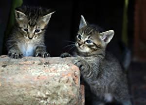 Wallpaper Cat 2 Kitty cat Animals