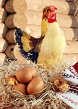 桌面壁纸,,鸡,卵,乾草,動物