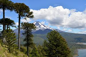 Images Chile Mountains Parks Scenery Trees