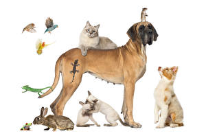 Picture Dog Cat Rabbit Frog Parrot Mice White background Aussie dog Great Dane Lizard animal