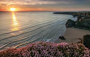 Fotos England Küste Sonnenaufgänge und Sonnenuntergänge Steine Strauch Sand Lundy Bay