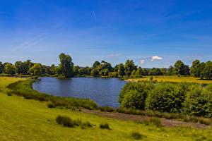デスクトップの壁紙、、イングランド、公園、池、低木、草、Petworth Park、自然