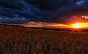 Hintergrundbilder Felder Sonnenaufgänge und Sonnenuntergänge Landschaftsfotografie Himmel Ähre Wolke Natur