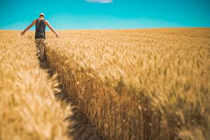 Bilder Felder Weizen Mann Weg Wanderung Hinten Natur