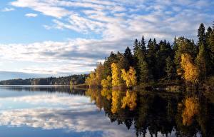 Fotos Wälder Herbst See Schweden Bäume Flaten lake