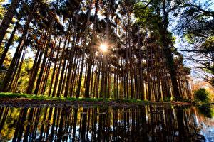 Hintergrundbilder Wald Herbst Bäume Sonne Lichtstrahl Natur