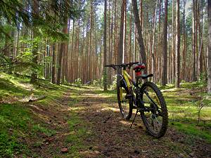 Photo Forest Bicycle Nature