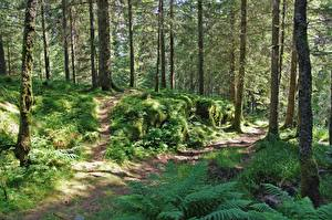 Bilder Wälder Sommer Bäume Gras Weg Laubmoose