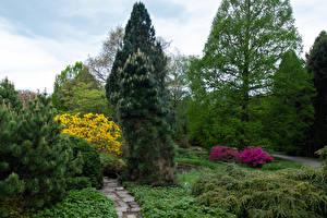 Image Germany Park Trees Shrubs Spruce Botanischer Garten Solingen Nature