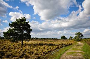 Wallpaper Meadow Trail Grass Trees Clouds Nature