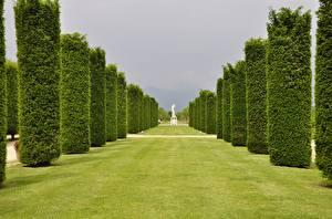 Sfondi desktop Italia Giardino Prato rasato Avenue Alberi Palace of Venaria Venaria Reale Città