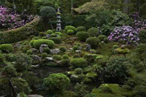 デスクトップの壁紙、、日本、京都市、公園、ツツジ、低木、Sanzenin Temple、自然
