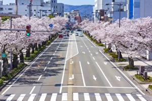Papel de Parede Desktop Japão Tóquio Estradas Arvores floridas Rua Sakura Cidades