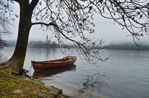 Bilder See Boot Slowenien Ast Nebel Bled lake Natur