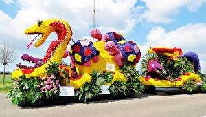 Hintergrundbilder Niederlande Schildkröten Schlangen Rosen Flamingoblumen Design Lisse Natur
