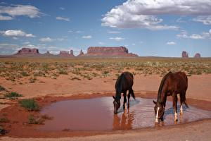 Pictures Parks Horses USA 2 Drinking water monument Valley Park, Utah Animals