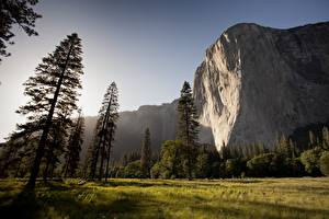 Hintergrundbilder Parks Vereinigte Staaten Berg Yosemite Felsen Gras Bäume mount El Capitan