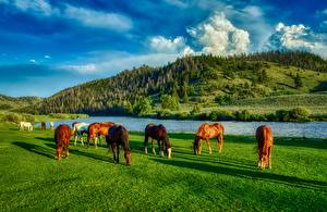 Tapety na pulpit Rzeki Koń Stany zjednoczone Łąka HDR Wzgórza Trawa Wyoming zwierzę
