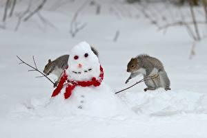 Fonds d'écran Écureuil Bonhommes de neige Neige Animaux images