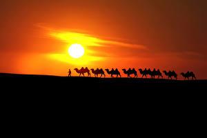 Bilder Sonnenaufgänge und Sonnenuntergänge Wüste Kamele Sonne Silhouette Natur