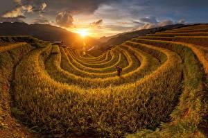 Hintergrundbilder Sonnenaufgänge und Sonnenuntergänge Acker Vietnam Sonne Natur