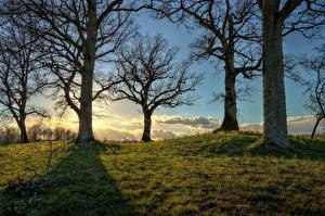 Pictures Sunrises and sunsets Trees Grass HDRI Branches
