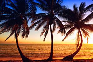 Fotos Tropen Sonnenaufgänge und Sonnenuntergänge Meer Küste Palmengewächse Drei 3