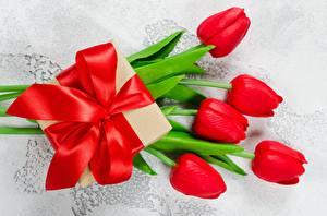 Fonds d'écran Tulipes Noeud de ruban Cadeaux Fleurs images
