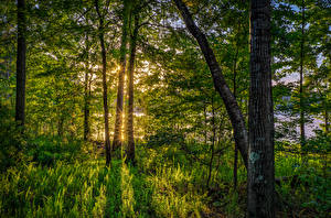 Bilder Vereinigte Staaten Wald Florida Bäume Gras Lichtstrahl