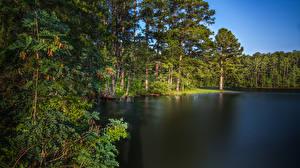 Bilder USA See Wälder Küste Bäume West Point Lake Georgia