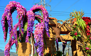 Hintergrundbilder USA Affe Levkojen Kalifornien Design Rose Parade Pasadena Natur