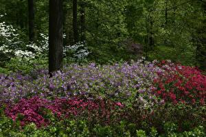 Tapety na pulpit USA Park Alstremeria Nowy Jork Krzewy Botanical Garden Natura