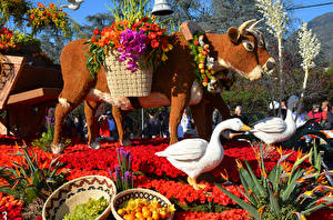 Fotos USA Parks Kuh Geese Rose Kalifornien Design Rose Parade Pasadena Natur