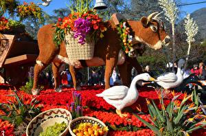 Fotos USA Parks Kuh Gänse Rose Kalifornien Design Rose Parade Pasadena Natur