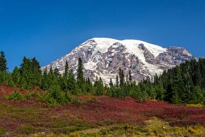 Fotos USA Parks Gebirge Wald Schnee Mount Rainier National Park, Mount Rainier, Washington state