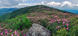 Fotos USA Parks Rhododendren Steine Hügel Strauch Roan Mountain Rhododendron Gardens Natur