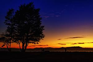 Picture USA Sunrises and sunsets California Silhouettes Trees Emeryville, Alameda County