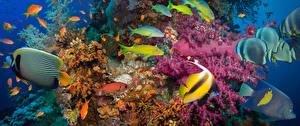 Fotos & Bilder Unterwasserwelt Koralle Fische Tiere