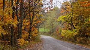 Bilder Herbst Wälder Straße Vereinigte Staaten Bäume Nelson County, Virginia
