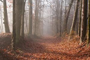 Hintergrundbilder Herbst Wälder Bäume Blatt Weg Nebel Natur